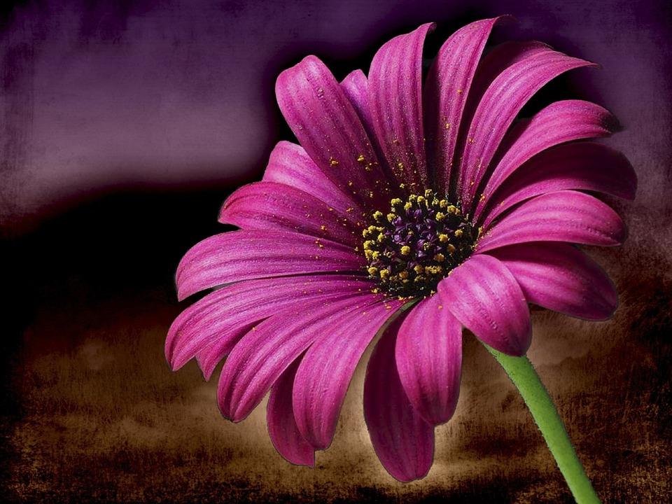 Citations sur la générosité Fleur